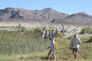 Nature Walks focus on LNT, playa dynamics, ecology and geology with the field trips lead by experts in native biology and geology. (Photo by Karina O